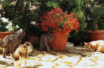 Кипровские кошки