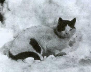 Кошки в Антарктике