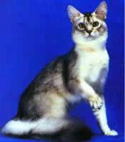 Аляскинский снежный кот (Alaskan Snow Cat)