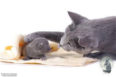 Кошки мира энциклопедия кошек