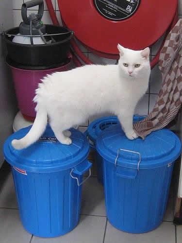 Кошки Мира | Кошачьи истории | Кошачий приют на воде